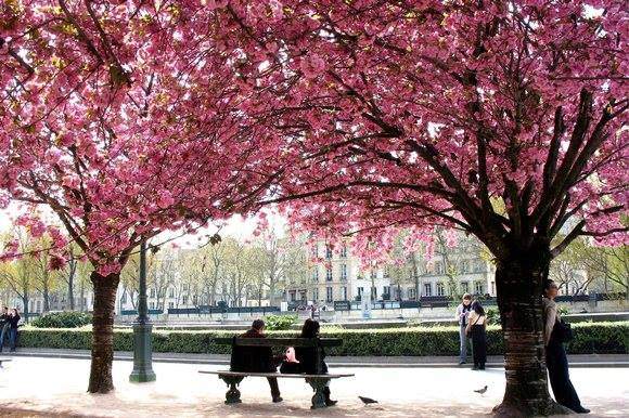 paris-in-spring