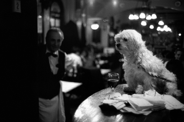 Dog Sitting on a Brasserie Counter